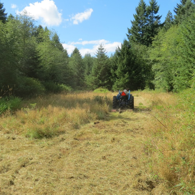 Our new neighbour mowing our meadow on our first day as landowners August 2013